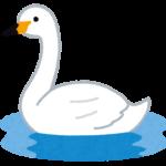 水面に浮かぶ白鳥